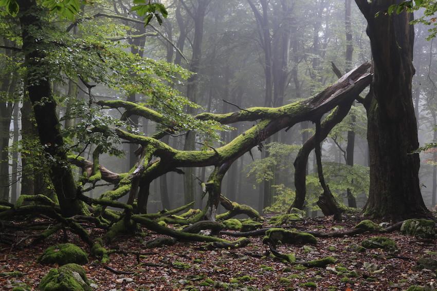 Impressionen Nationalpark Hunsrück-Hochwald